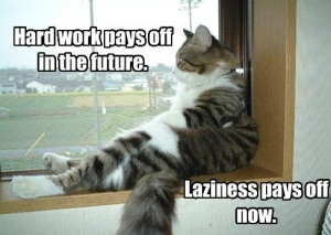 Self Discipline - Lazy Cat